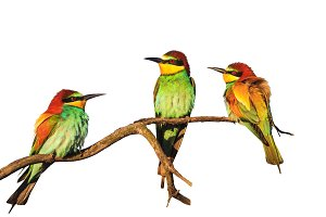 Exotic birds sitting on a branch