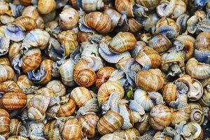 texture of snails Helix pomatia