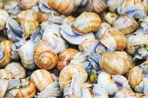 Helix pomatia texture of snails