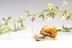 snail crawling around a beautiful