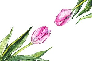 Watercolor tulip flower isolated art