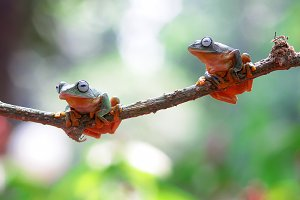 flying frogs, flying frogs on twigs