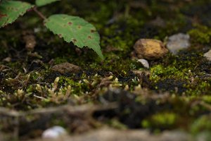 Soil and moss