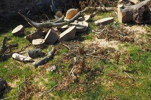wood logs chopped