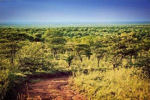Serengeti savanna landscape, Africa
