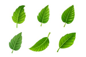 Various shapes of green leaves set