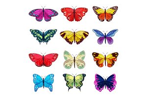 Butterfly vector colorful insect