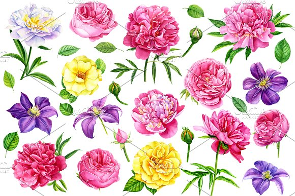 Summer flowers watercolor