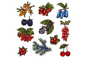 Garden and wild forest berry fruits