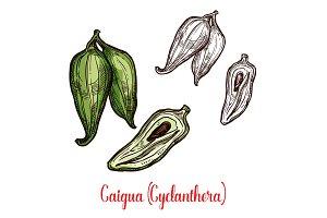 Cyclanthera pedata vegetable