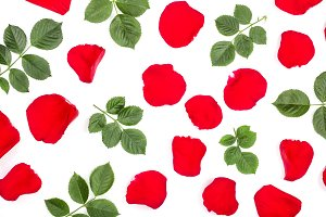petals of beautiful red rose with