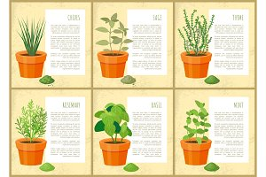 Edible Indoor Plants Used as