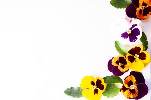 Frame made of pansies flowers