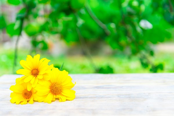 Yellow chamomile on wooden top tabl…