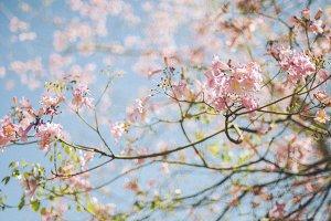 18th Spring