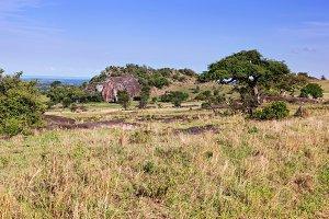 Grassy, savanna, Tsavo West, Kenya