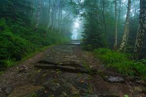Lonely person in misty forest