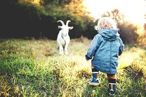 A little toddler boy and a goat