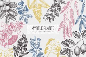 Myrtle Plants Collection