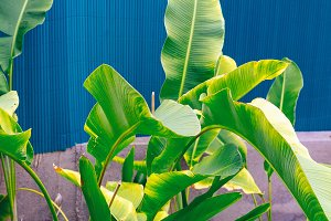 Plants on blue. Tropical green