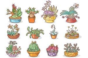 Set of Succulent