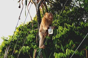 Monkey holding a plastic cup
