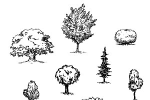 Trees & Shrubs Vector Illustrations