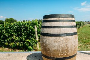 Wine with wooden barrel on vineyard