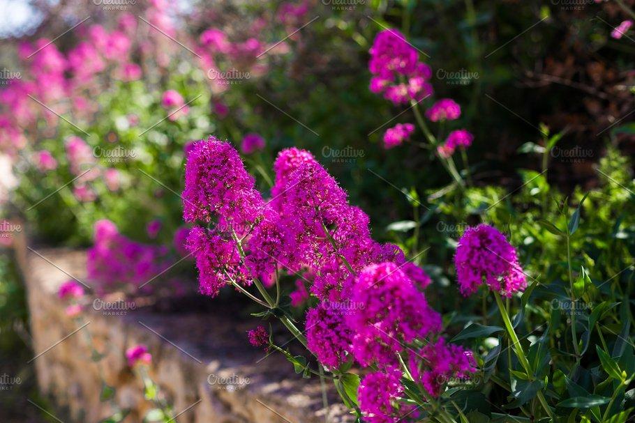 Natural Floral Background Purple Nature Photos Creative Market