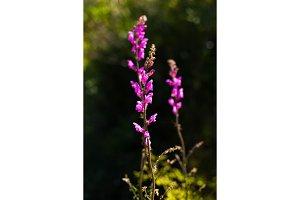 Natural flower background. Wild