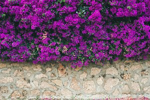 Wall covered with purple