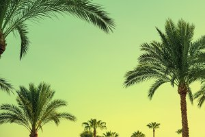 Exotic summer tropical palm trees