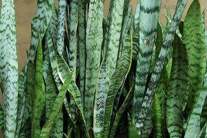 Handmade Natural Planter