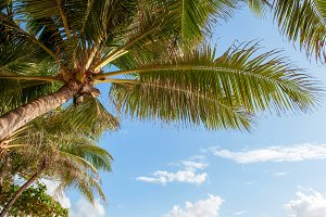 Green palm tree against blue sky and