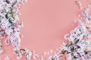Frame lilac flowers pink background