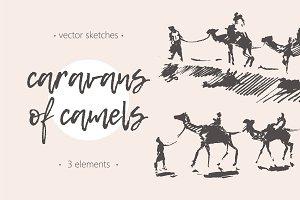 Caravans of camels
