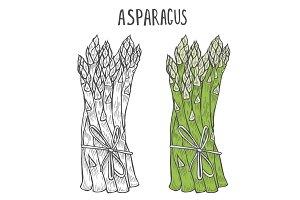 Hand drawn asparagus.