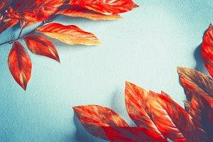 Orange red autumn leaves background