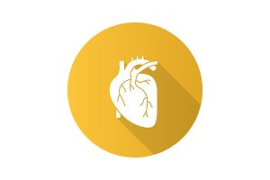 Human heart anatomy icon