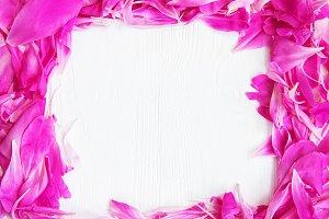 pink peony flower petals