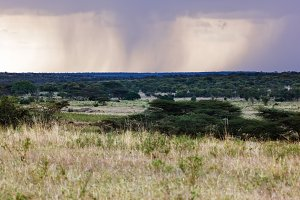 Savanna plain landscape, Africa