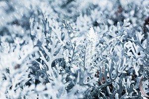 Frozen plants during snow blizzard