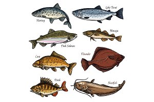 Sea and freshwater fish animals