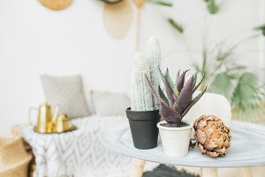 Succulents in flowerpots