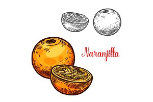 Naranjilla vector sketch exotic