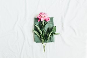 Pink peony flower on blanket