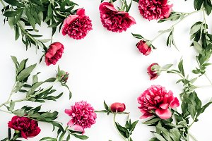 Frame of pink peony flowers