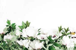 White peony flowers header