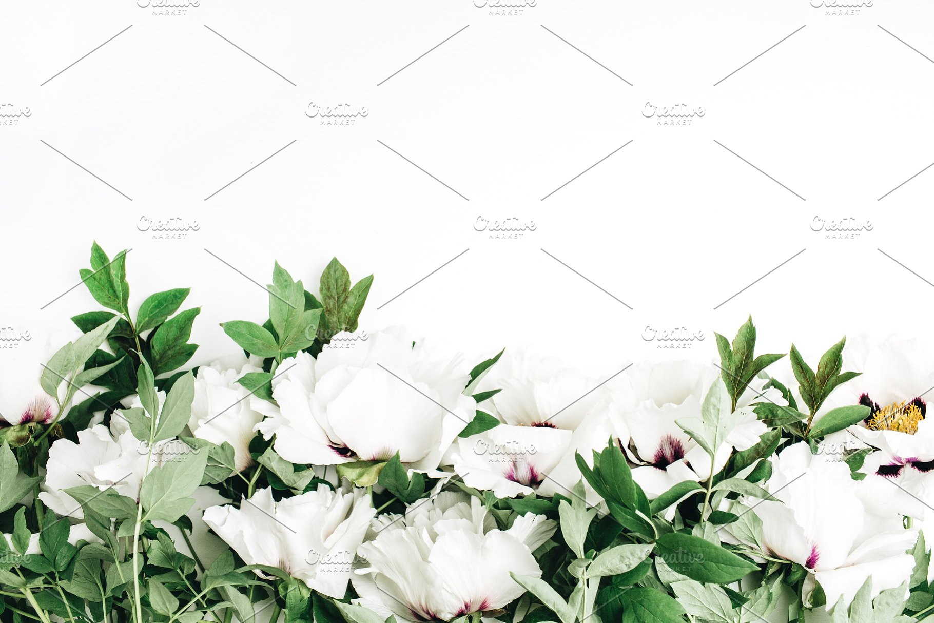 White Peony Flowers Header Abstract Photos Creative Market