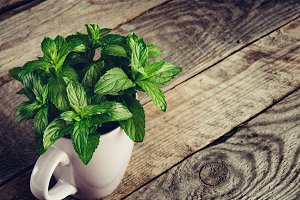 Mint leaves. peppermint of mint with